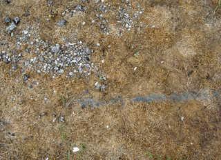 Forest floor terrain 0013