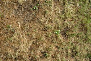 Forest floor terrain 0014