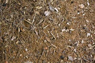 Forest floor terrain 0015