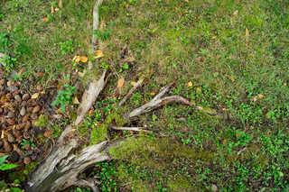 Forest floor terrain 0018