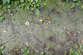 Forest floor terrain 0019