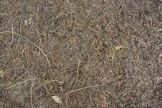 Forest floor terrain 0020