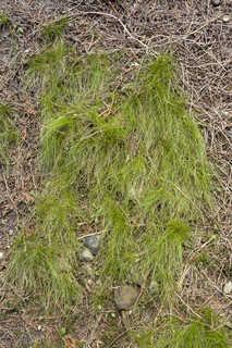 Forest floor terrain 0021