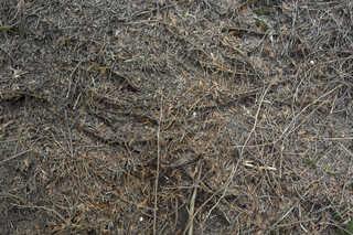 Forest floor terrain 0024