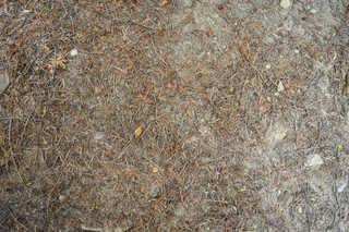 Forest floor terrain 0025