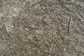 Forest floor terrain 0027