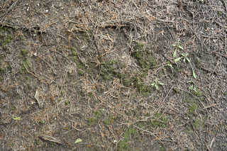 Forest floor terrain 0029