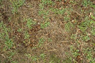 Forest floor terrain 0031