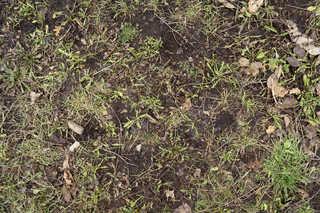 Forest floor terrain 0033