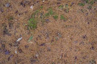 Forest floor terrain 0034