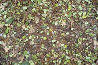 Forest floor terrain 0035