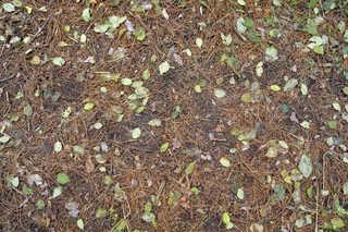 Forest floor terrain 0036