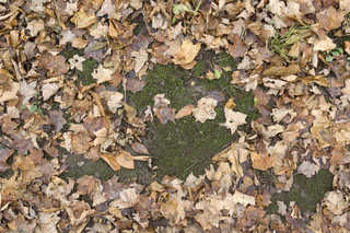 Forest floor terrain 0039