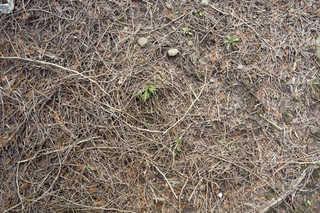 Forest floor terrain 0041