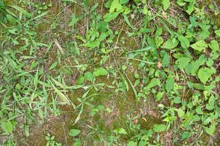 Forest floor terrain 0043