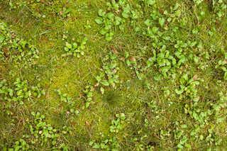 Forest floor terrain 0044