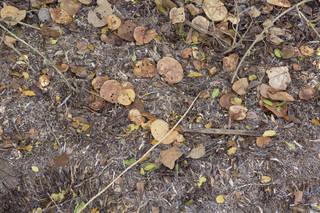 Forest floor terrain 0049