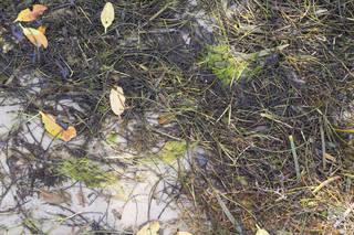 Forest floor terrain 0050