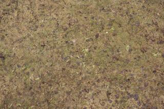 Forest floor terrain 0051
