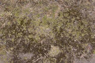 Forest floor terrain 0053