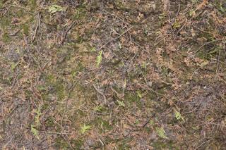 Forest floor terrain 0057