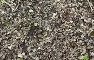 Forest floor terrain 0058