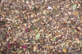 Forest floor terrain 0059