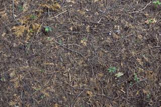 Forest floor terrain 0061