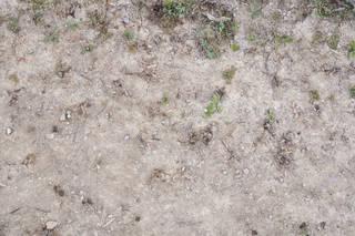 Forest floor terrain 0063