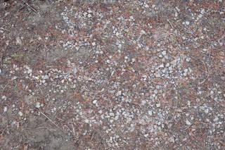 Forest floor terrain 0065