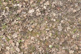 Forest floor terrain 0066