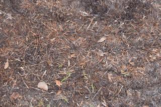 Forest floor terrain 0068