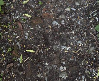 Forest floor terrain 0069