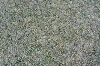 Frost terrain 0003