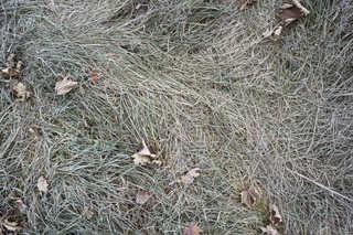 Frost terrain 0004