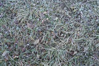 Frost terrain 0006