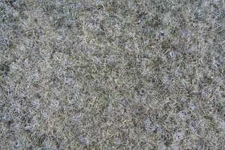 Frost terrain 0010