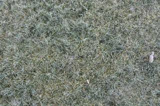 Frost terrain 0011