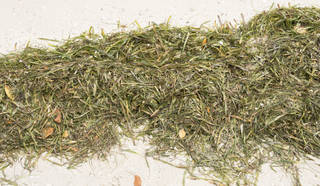 Grass and straw terrain 0091