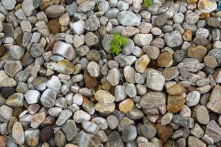 Gravel terrain 0013