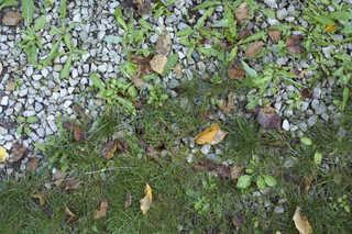Gravel terrain 0025