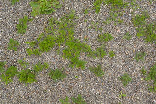 Gravel terrain 0032