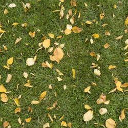 Leaf Terrain Category