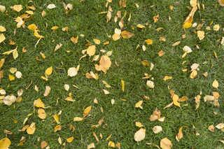 Leaf terrain 0001