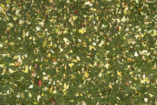Leaf terrain 0004