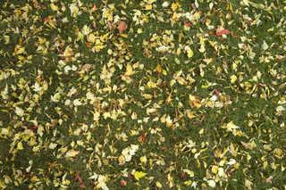Leaf terrain 0005