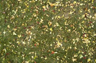 Leaf terrain 0006