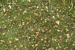 Leaf terrain 0007