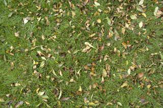 Leaf terrain 0008