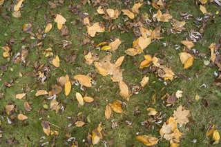Leaf terrain 0010